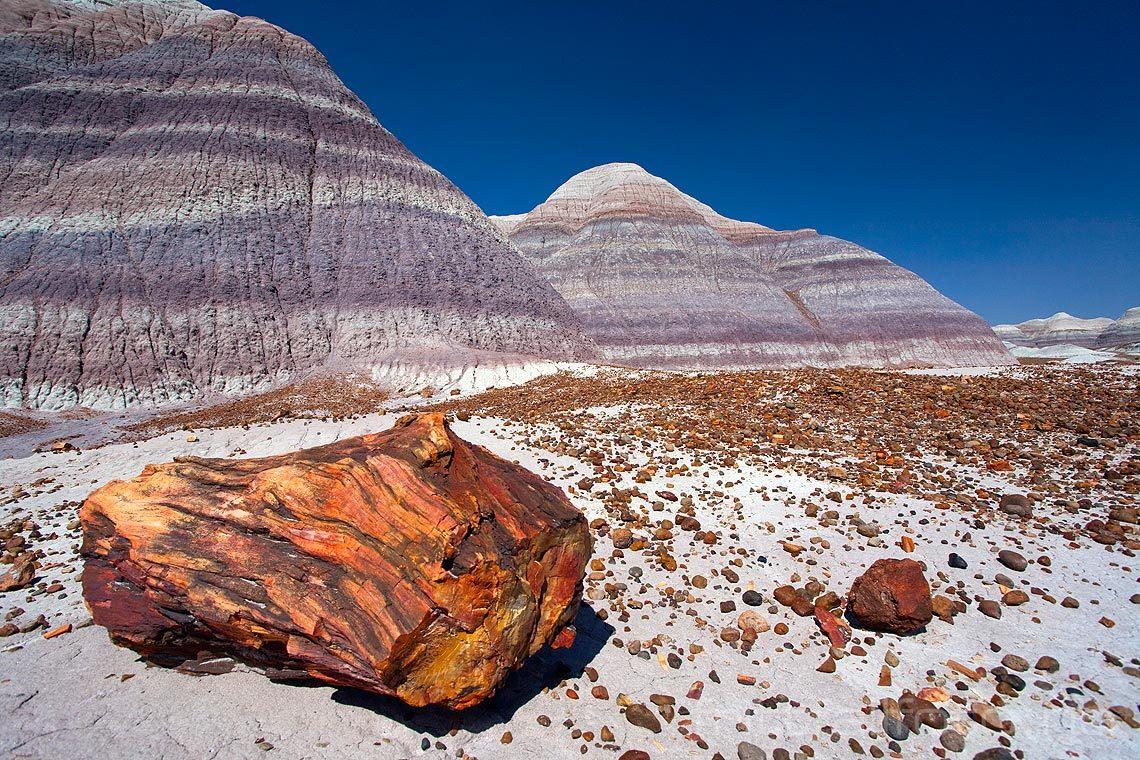 Forsteinet tre ligger strødd ved Blue Mesa i Petrified Forest National Park, Arizona, USA.