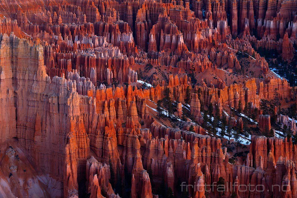 Morgenlyset farger fantastiske Bryce Canyon, Utah, USA.<br>Bildenr 20080322-003.