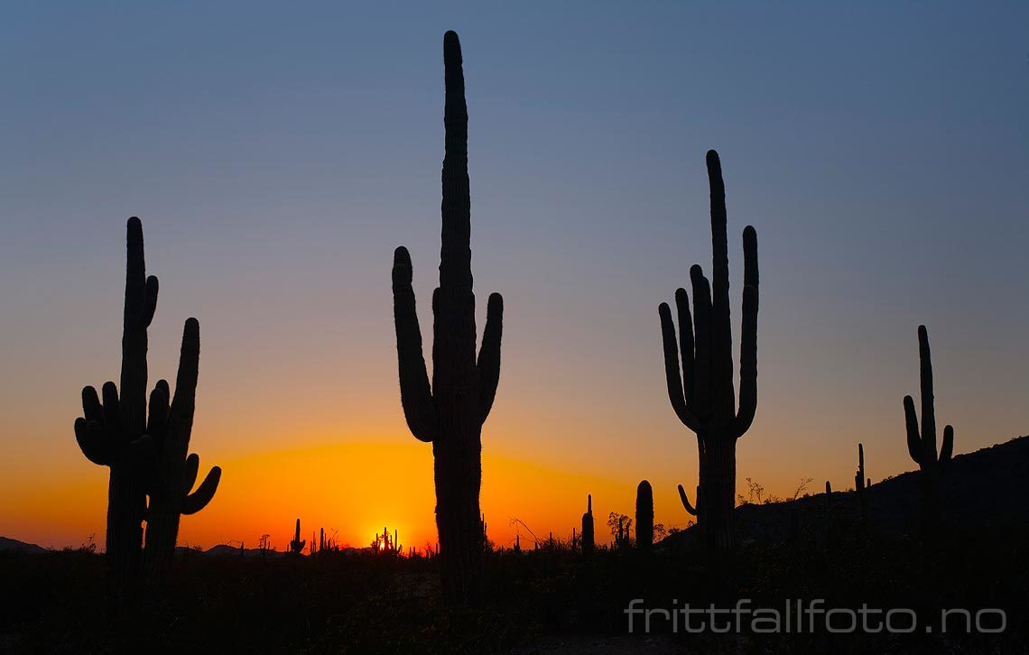 Solnedgang ved Maricopa Road i Sonoran Desert National Monument, Arizona, USA.
