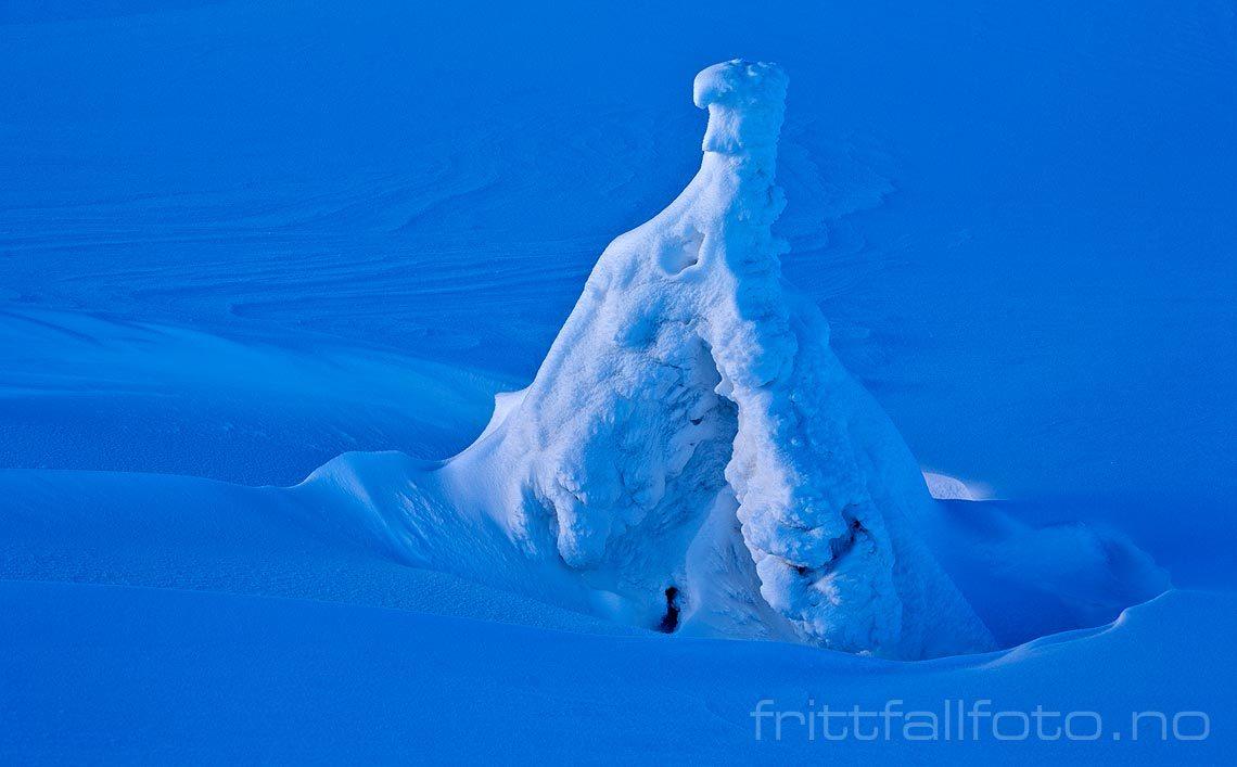 Ørnen har landet ved Krintofjellet på Lifjell, Midt-Telemark, Vestfold og Telemark.<br>Bildenr 20090125-086.