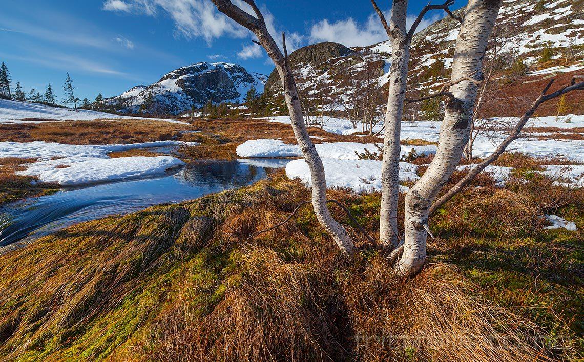 Snøen smelter ved Nautli på Lifjell, Seljord, Vestfold og Telemark.<br>Bildenr 20120313-329.