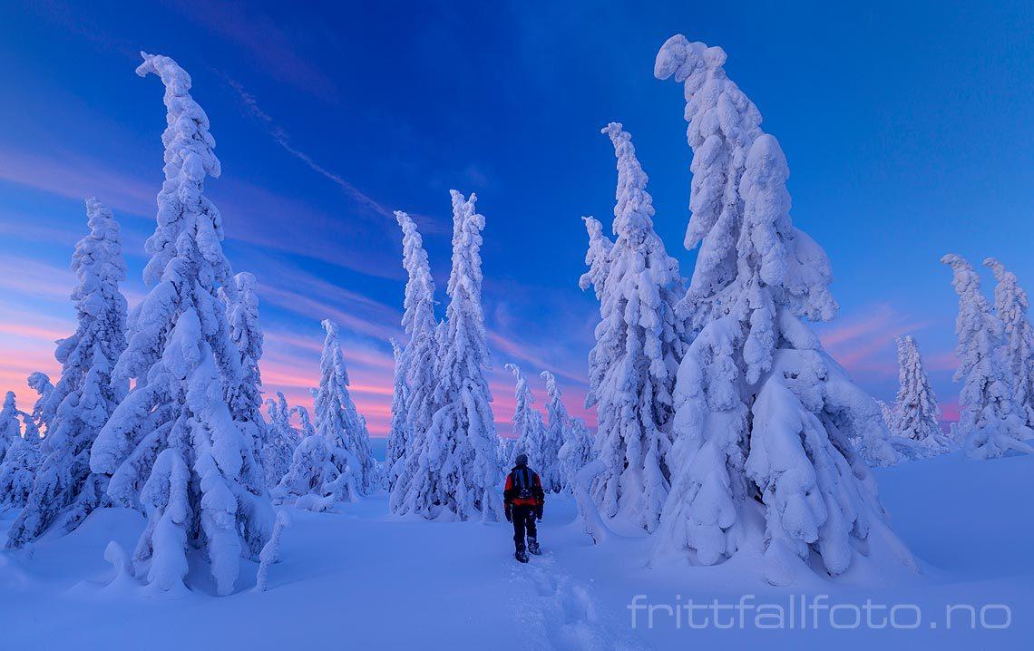 Inn i vinterskogen ved Jønnbuflåtin på Lifjell, Midt-Telemark, Vestfold og Telemark.<br>Bildenr 20140208-051.