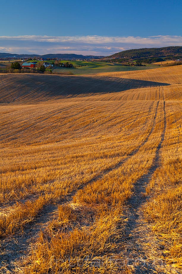 Kornåkeren er høstet ved Heni nær Årstad, Gjerdrum kommune, Akershus.