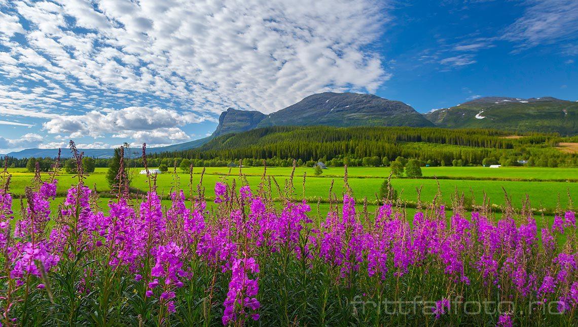 Sommerdag nær Ullsåk i Hemsedal, Viken.<br>Bildenr 20150808-174.