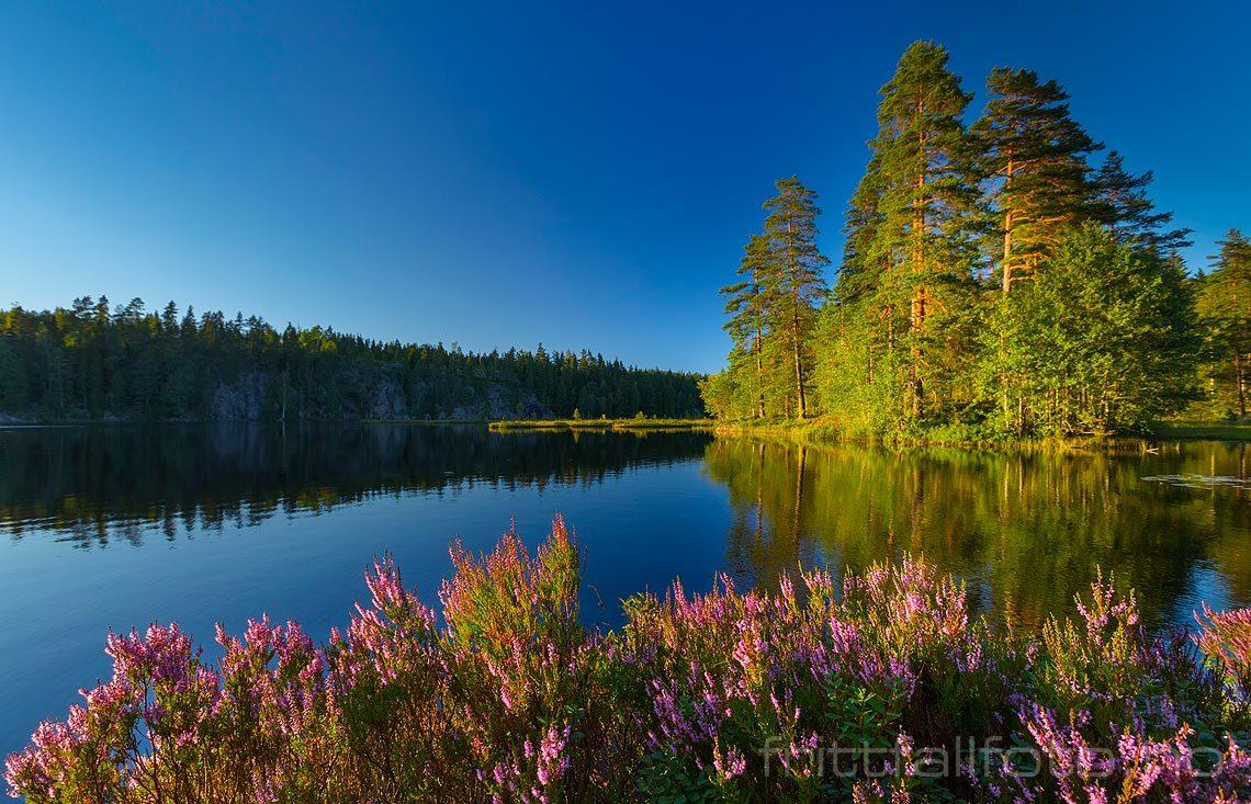 Sommerkveld ved Tvillingtjenn, Aurskog-Høland, Viken.<br>Bildenr 20150817-067.