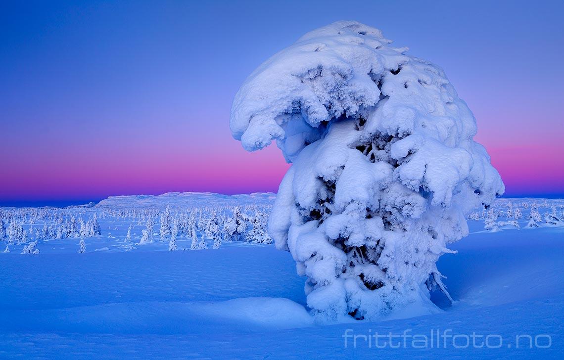 Det er like før januarsola tipper over horisonten ved Blefjell, Flesberg, Buskerud.