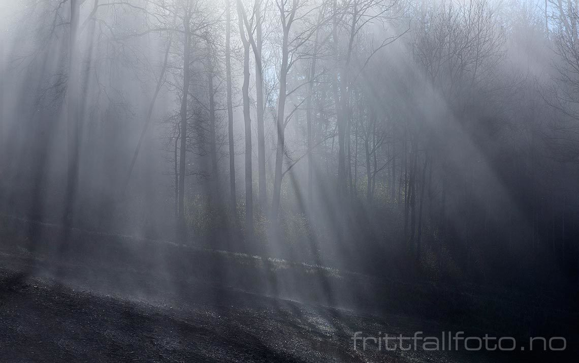 Morgentåka driver gjennom skogen ved Vassum nær Sundby, Ås kommune, Akershus.