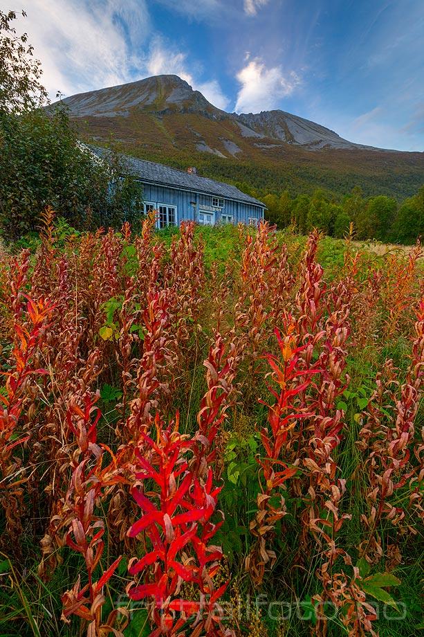 Høsten understreker forfallet ved dette fraflyttede gårdsbruket i Skorgedalen, Vestnes, Møre og Romsdal.