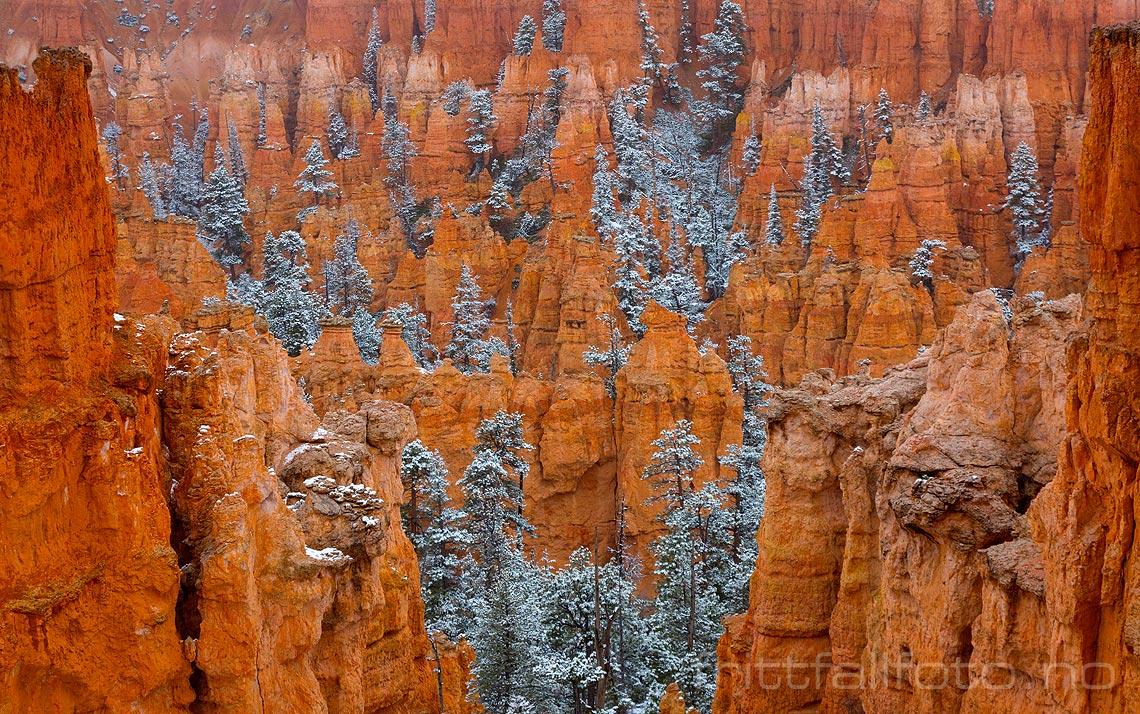Bryce Canyon fikk navnet sitt etter mormoner-pioneren Ebenezer Bryce, som slo seg ned her med familie og kvegdrift i 1850-årene. Stedet ligger i Garfield County, Utah.<br>Bildenr 20170403-415.