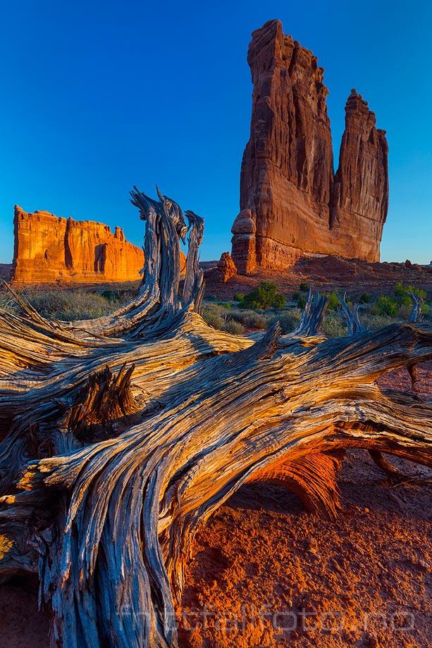 Frisk og klar aprilmorgen ved foten av The Organ i Arches National Park ved Moab, Grand County, Utah, USA.