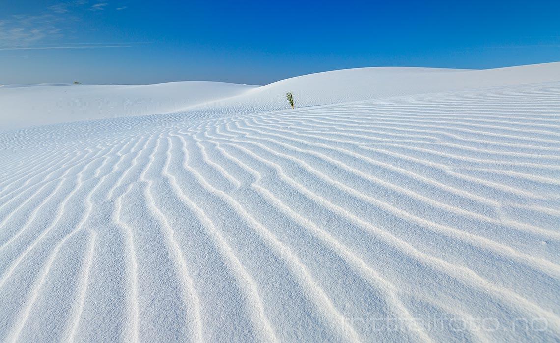 Vinden har skapt vakre linjer på sanddynene av gipskrystaller i White Sands National Monument, New Mexico, USA.<br>Bildenr 20170411-152.