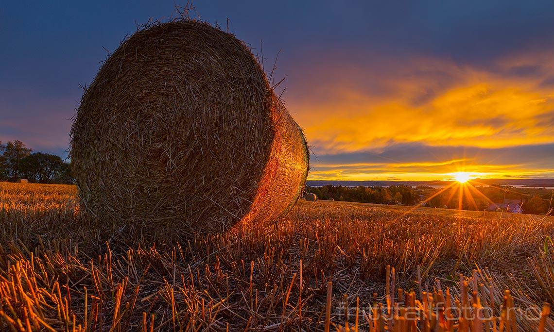 Solnedgang over kulturlandskapet ved Lalum, Stange, Hedmark.
