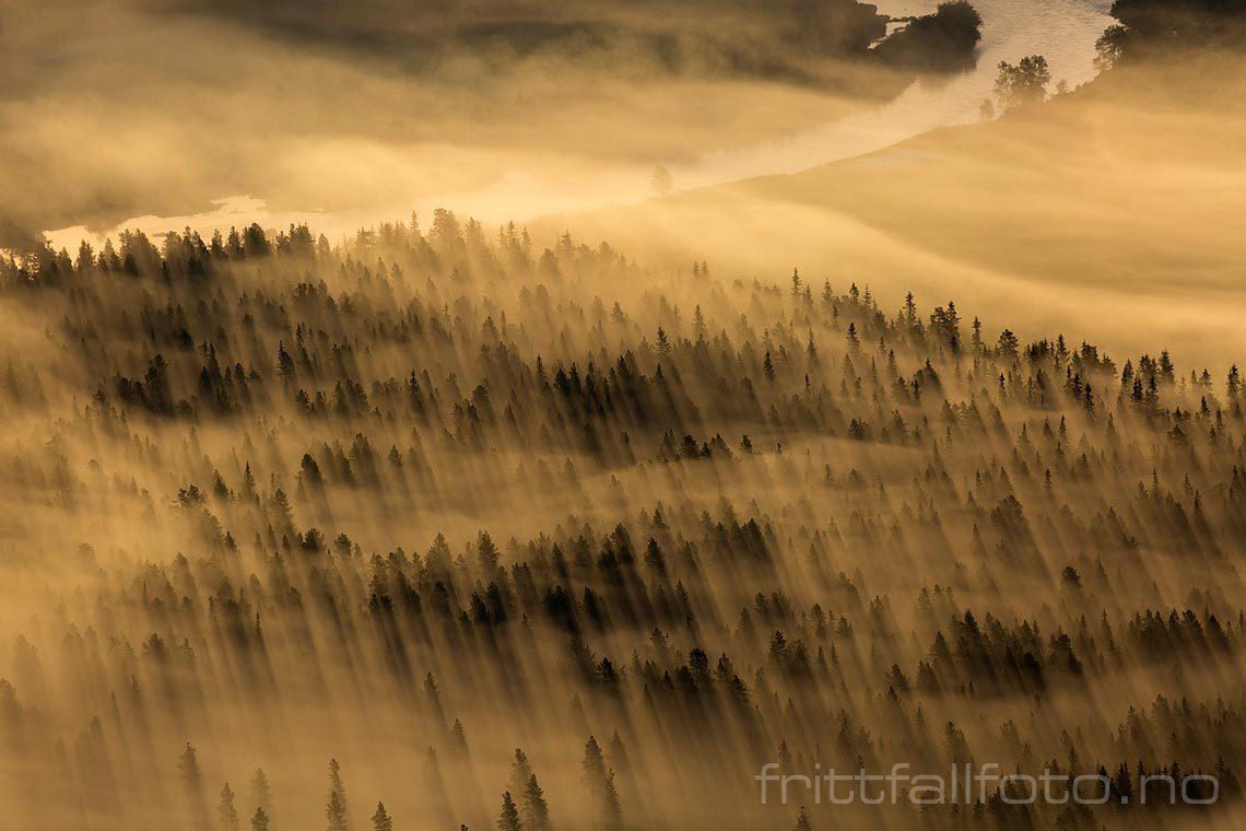 Morgentåke over skogen nær Nedre Gjuvestølen i Hemsedal, Hemsedal, Viken.<br>Bildenr 20150808-015.