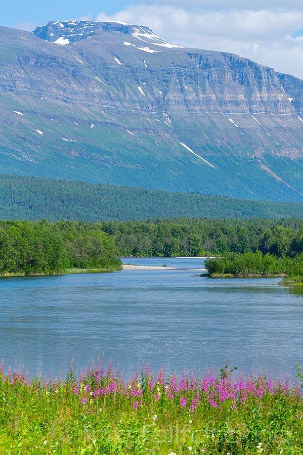 Rostafjellet danner bakgrunn for Målselva i Målselvdalen, Målselv kommune, Troms.