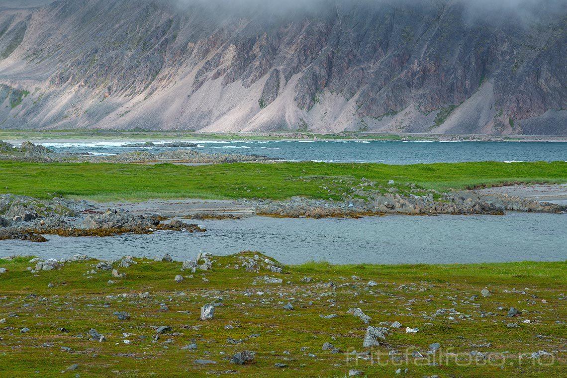 Ved Løkvika nær Sandfjorden på Varangerhalvøya, Berlevåg, Troms og Finnmark.<br>Bildenr 20170731-240.