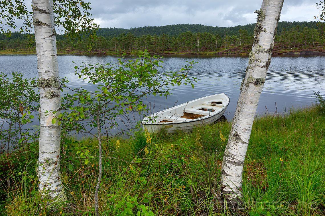 Sommeridyll ved Lonane nær Vatnestrøm, Iveland, Agder.<br>Bildenr 20170818-005.