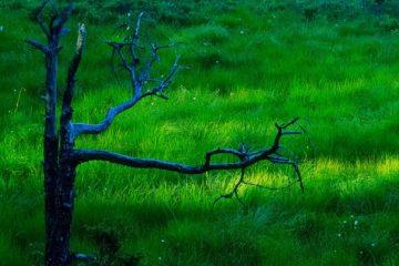 Olashei naturreservat, Lillesand.