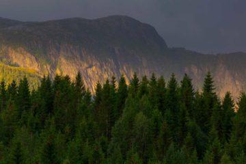 Svartdalsfjellet ved Salsvatnet, Namsos.
