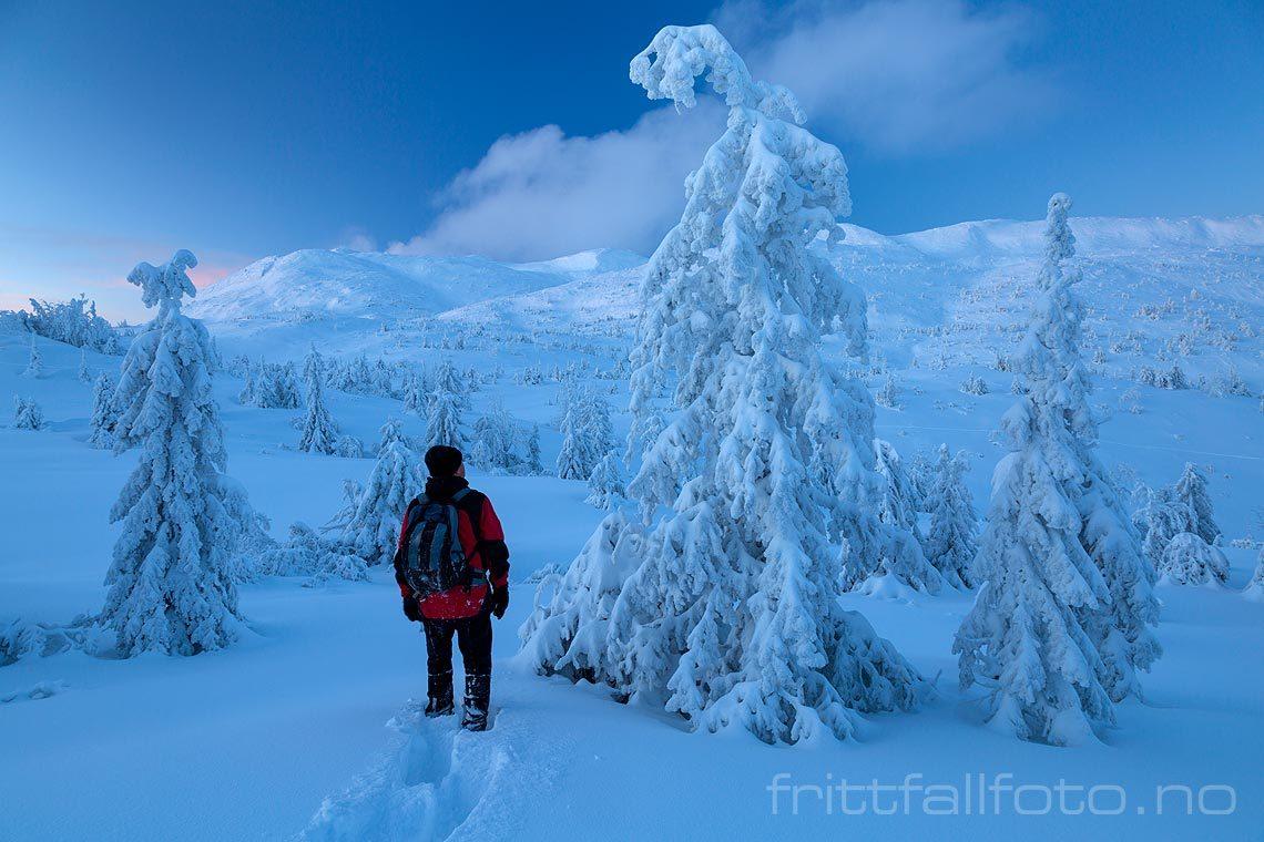 Eventyrstemning i fjellskogen under Lifjell i Telemark.