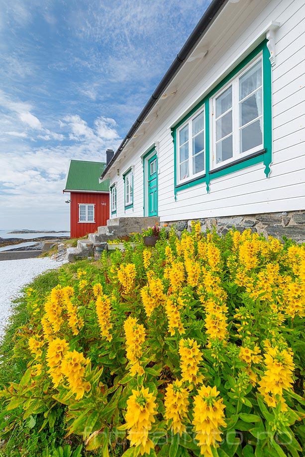 Sommeridyll ved Søre Bjørnsund, Fræna, Møre og Romsdal.