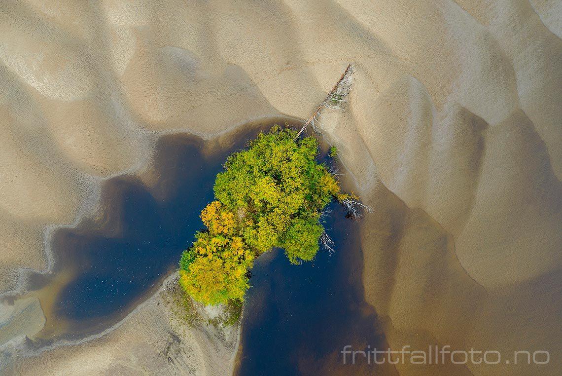 Sand og vegetasjon på Løkenstranda nær Heradsbygd, Elverum, Innlandet.<br>Bildenr 20191004-129.