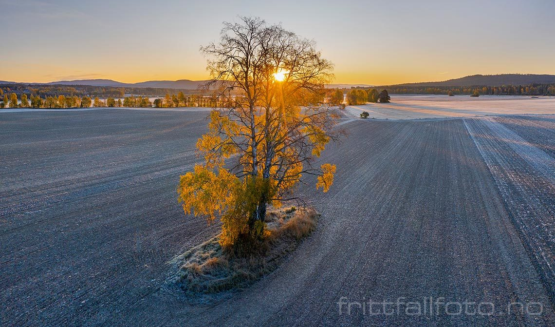 Morgen ved jordbrukslandskapet nær Løken i Heradsbygd, Elverum, Innlandet.<br>Bildenr 20191006-096-111.