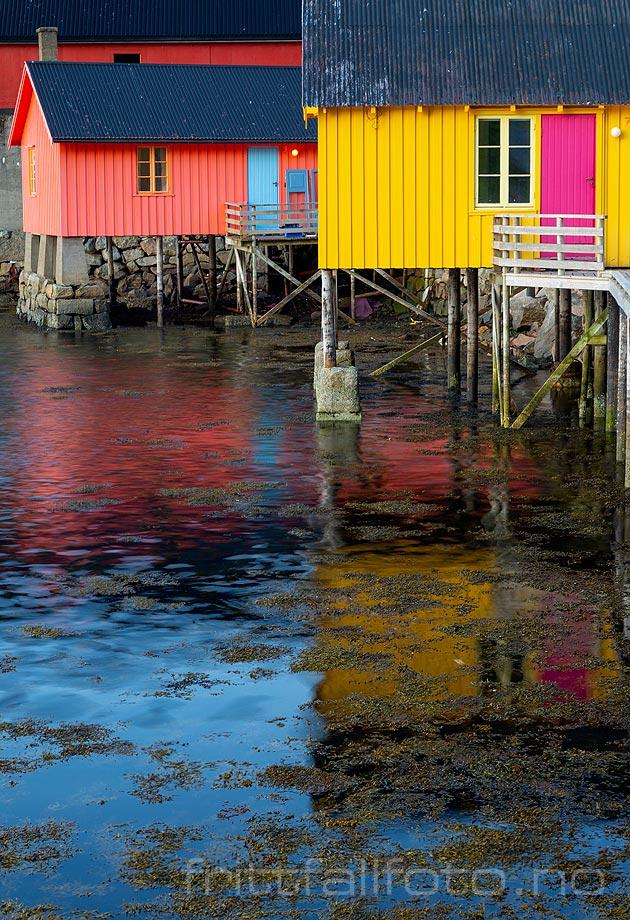 Fargerike rorobuer ved Ballstad. Vestvågøy i Lofoten, Nordland.<br>Bildenr 20190730-312.