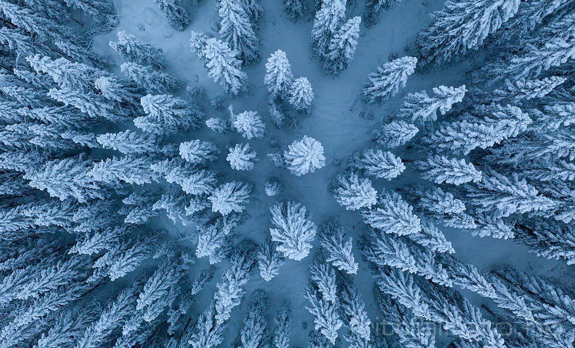 Snødekt granskog på Romeriksåsene, Lunner, Viken.<br>Bildenr 20191219-038.