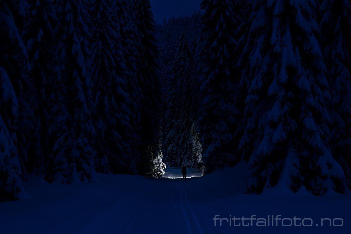 Inn i storskogen ved Vihus, Midt-Telemark, Vestfold og Telemark.<br>Bildenr 20180122-157.