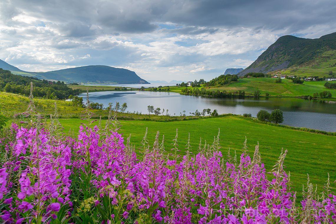 Sommerkveld ved Kasfjord, Harstad, Troms og Finnmark.<br>Bildenr 20180730-489.