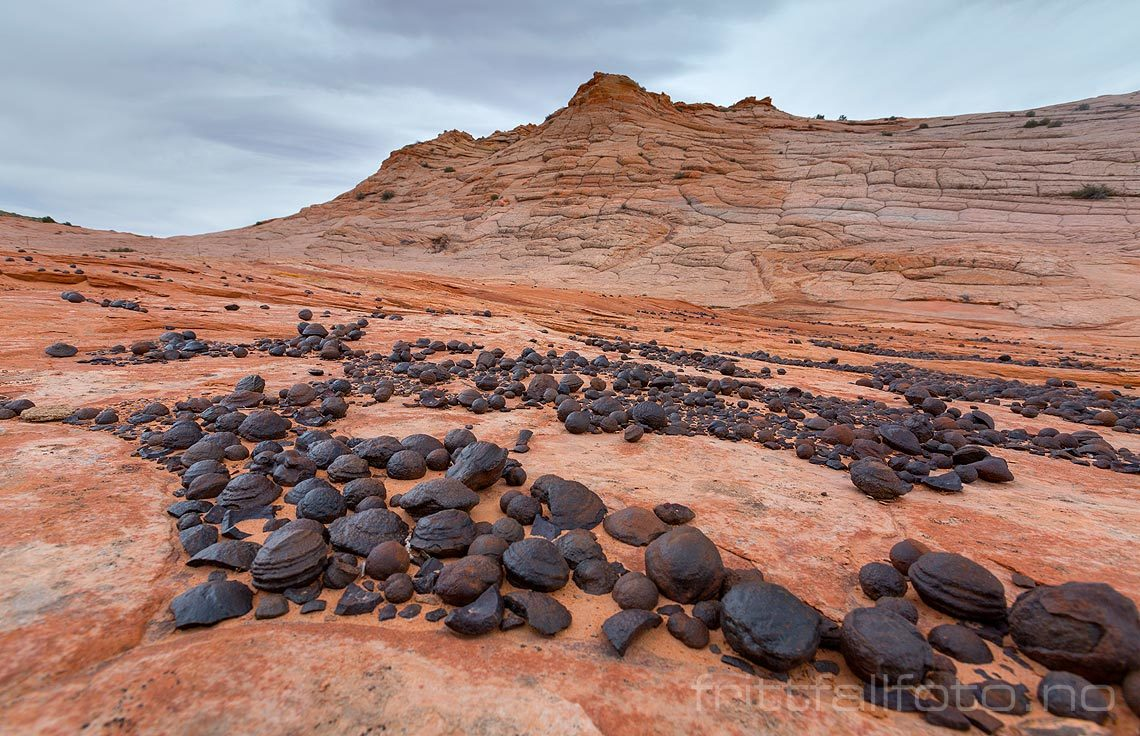Moqui marbles ligger strødd ved Harris Wash nær Escalante,  Grand Staircase - Escalante National Monument, Garfield County, Utah, USA.<br>Bildenr 20170407-169.