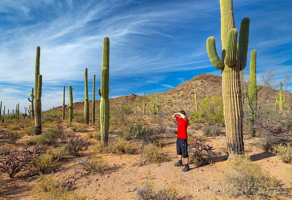 Ved Tucson Mountains i Saguaro National Park, Pima County, Arizona, USA.<br>Bildenr 20170411-356.